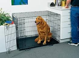 dog crates size chart life stages dog crate life stages crate midwest life stages dog