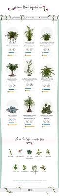 new house plants poisonous to dogs 537 best gardening images on