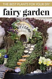 best plants for your diy fairy garden