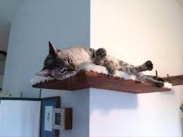 Corner Cat Shelves Cat Shelves DIY Design Optimizing Home Decor Ideas 53