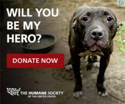 humane society ads. Fine Ads Pitbull Looking For A Hero  Humane Society Small Ads Inside Humane Society Ads U