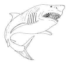 great white shark drawing 6 new of free printable coloring pages stock