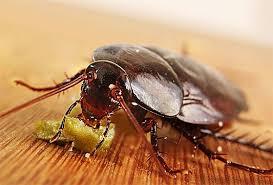 <b>Тараканы</b> в доме – Что делать если на кухне и в ванной ...
