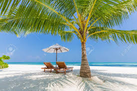 beach background beautiful beach landscape tropical nature scene palm trees and blue sky