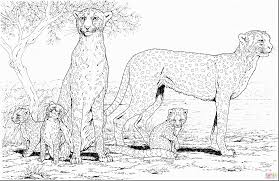Small Picture awesome cheetah coloring pages with cheetah coloring page