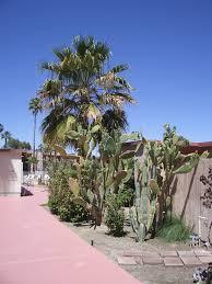 088 ocotillo lodge gardens jpg