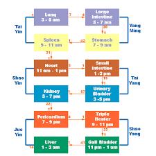 More Than Circadian Rhythms Meridians Time Chart W Link