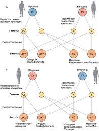 Генетика и здоровье человека Биология Общая биология  Генетика и здоровье человека