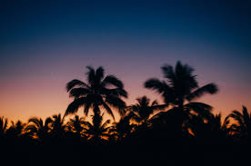palm trees sunset tumblr. Photography Colors Beach Palm Trees Sunset Tropical Mexico 2015 Artists On Tumblr Vsco Vscocam Photographers