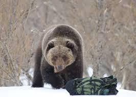 Медведь и рюкзак