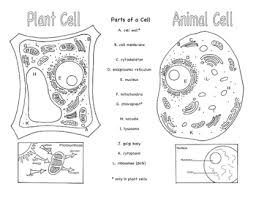 Small Picture Plant and Animal Cells Brochure Ce 1 by Bluebird Teaching Materials