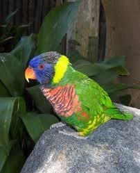 bright colorful parrot