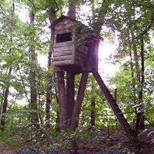 basic tree house pictures. Basic Tree House With Good Proportions Compared To The Trees Surrounding It. Pictures S