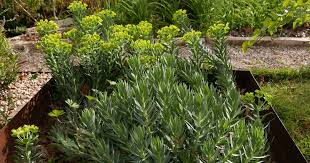 spring into summer annuals perennials season 22 episode 20 central texas gardener pbs