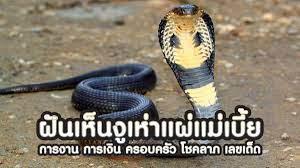 ฝันเห็นงูเห่าแผ่แม่เบี้ย การงาน การเงิน ครอบครัว โชคลาภ เลขเด็ด - SCCWiki