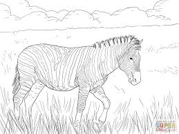 Small Picture Printable Zebra Coloring Pages for Kids FITFRU Style