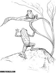 Small Picture 114 best Frog Coloring images on Pinterest Coloring books