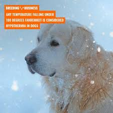 At 0 degrees celsius (32°f) is where it starts being unsafe. Can Dogs Sleep Outside In The Winter Risk Of Hypothermia Solutions