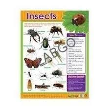 Insect Chart Reference Books Study Material M G
