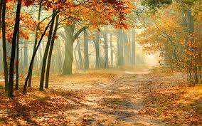 3528-autumn-forest.jpg