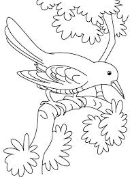 Small Picture Cuckoo coloring pages Download and print Cuckoo coloring pages
