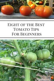 Kitchen Garden Plants 17 Best Ideas About Tomato Garden On Pinterest Tomatos Or