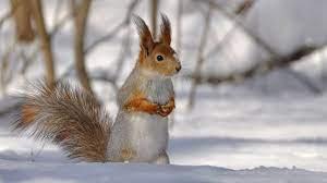 Animals In Winter Wallpapers ...