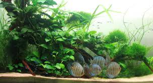 Cool Aquariums Anubias Nana So What Do You Think Please Leave Me A Comment