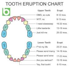 When Do Babies Get Teeth Chart Realistic Tooth Eruption Chart Teething Chart Teeth