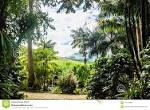 imagem de Alto Jequitibá Minas Gerais n-19