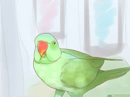 Parrot Diet Chart How To Care For A Parrot With Pictures Wikihow