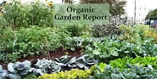 desert garden design ideas organic garden