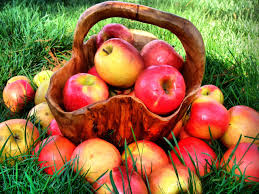 Image result for image apple fruit