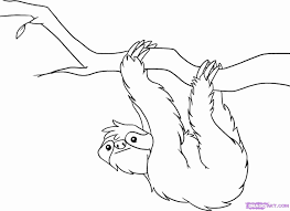 rainforest animals drawings rainforest animals coloring pages free rainfores on fantastic rainforest animals coloring pages with