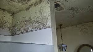 remove mold from walls at home guide
