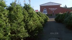 All Saints Christmas Tree Sale has large selection of beautiful trees
