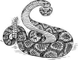rattlesnake clipart. Beautiful Rattlesnake Rattlesnake 2 With Clipart E