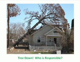 If a Tree Falls Into Your Yard, Are You Responsible?