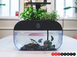 ecogarden is a smart symbiotic greenhouse and fish tank combo that brings nature to your home eco system
