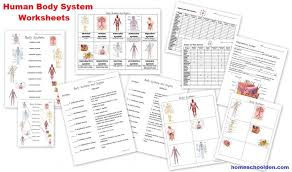 Human Body Worksheets Cells Tissues Organs And The Human