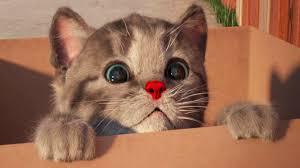 Little Kitten <b>My Favorite Cat</b> - Play Fun Kitten Pet Care Games For ...
