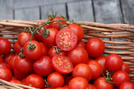 Image result for tommy toe tomato plant