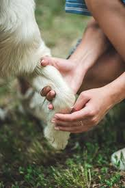 we ll talk about it and conclude with a simple and natural homemade dog paw balm recipe with ings you may already have in your kitchen