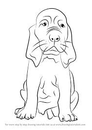 Small Picture Learn How to Draw a Bloodhound Puppy Dogs Step by Step Drawing