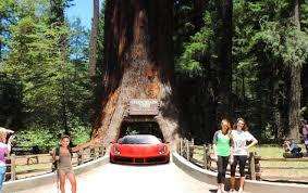 visit leggett s world famous drive thru tree