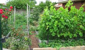 Small Picture Permaculture Garden Design Garden ideas and garden design
