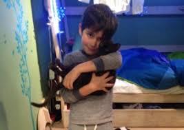 Swiss Cottage family's plea for return of missing <b>Burmese kitten</b> ...