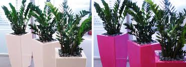 office plant displays. Plain Office Refurbished Office Plant Displays With