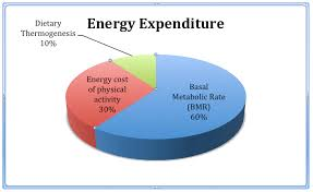 Energy Expenditure Chart For Activity The Best Foods And Drinks That Increase Metabolism
