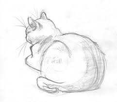 Sketches Animal Simple Animal Sketches Google Search Art In 2019 Drawings